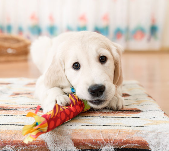 Pet Odor Can Chase Away Buyers